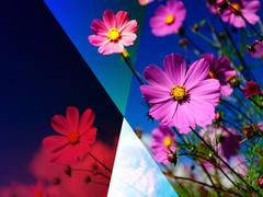 6511187b835c7b6-photo_240x180